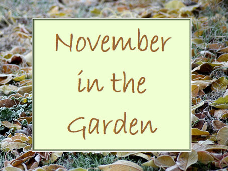 This Month in the Garden - incorporating Wine of the Month - November 2020