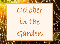 This Month in the Garden - incorporating Wine of the Month - October 2020