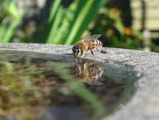 The Bees' Needs (part 3)