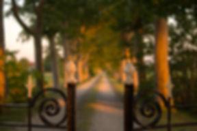 blur-daylight-depth-of-field-10678.jpg