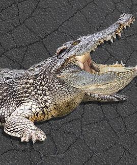 Alligator-Cracks-in-Asphalt.jpg