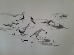 27) Sand Pipers