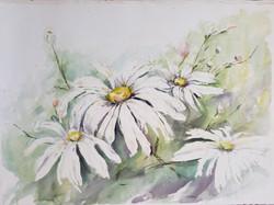 30) Daisies