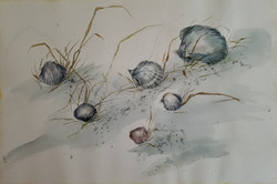 18) Sea Grass Scallops