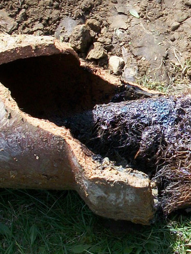 sanitary sewer line roots