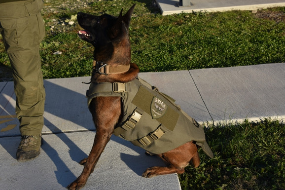 Erie County K9 Receives Bullet, Stab Protective Vest