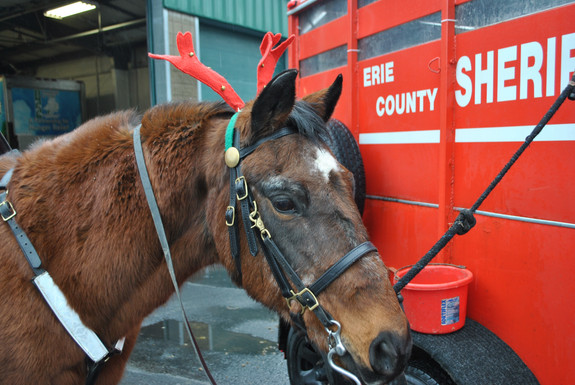 Erie County Sheriff's Mounted Reserve Unit is Hosting its 16th Semi-Annual Mounted for Meals Food Dr