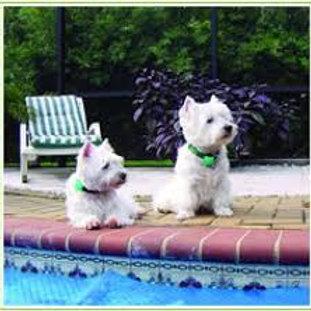 Collar de Mascotas con alarma de inmersión