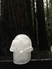 OMAR in the Redwood forest