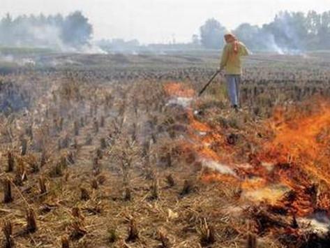 फसल कटाई के बाद अवशेषों को जलाने पर किसानों के चालान काटने से कृषि विभागने किया मना