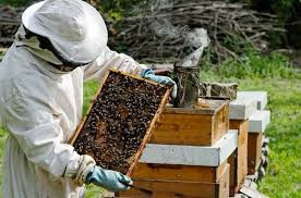 हरियाणा में मधुमक्खी पालन करने वालों के लिए बड़े काम की खबर