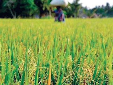 हरियाणा सरकार का बड़ा एलान किसानों कोे मिलेंगे प्रति एकड़ 2-2 हजार रूपए, ये है कारण?
