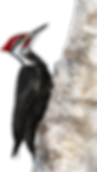 woodpecker-logo.png