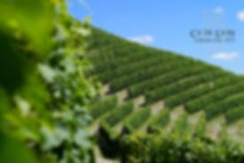 La vista del territorio di Canelli dall'azienda vitivinicola Ca' De Lion