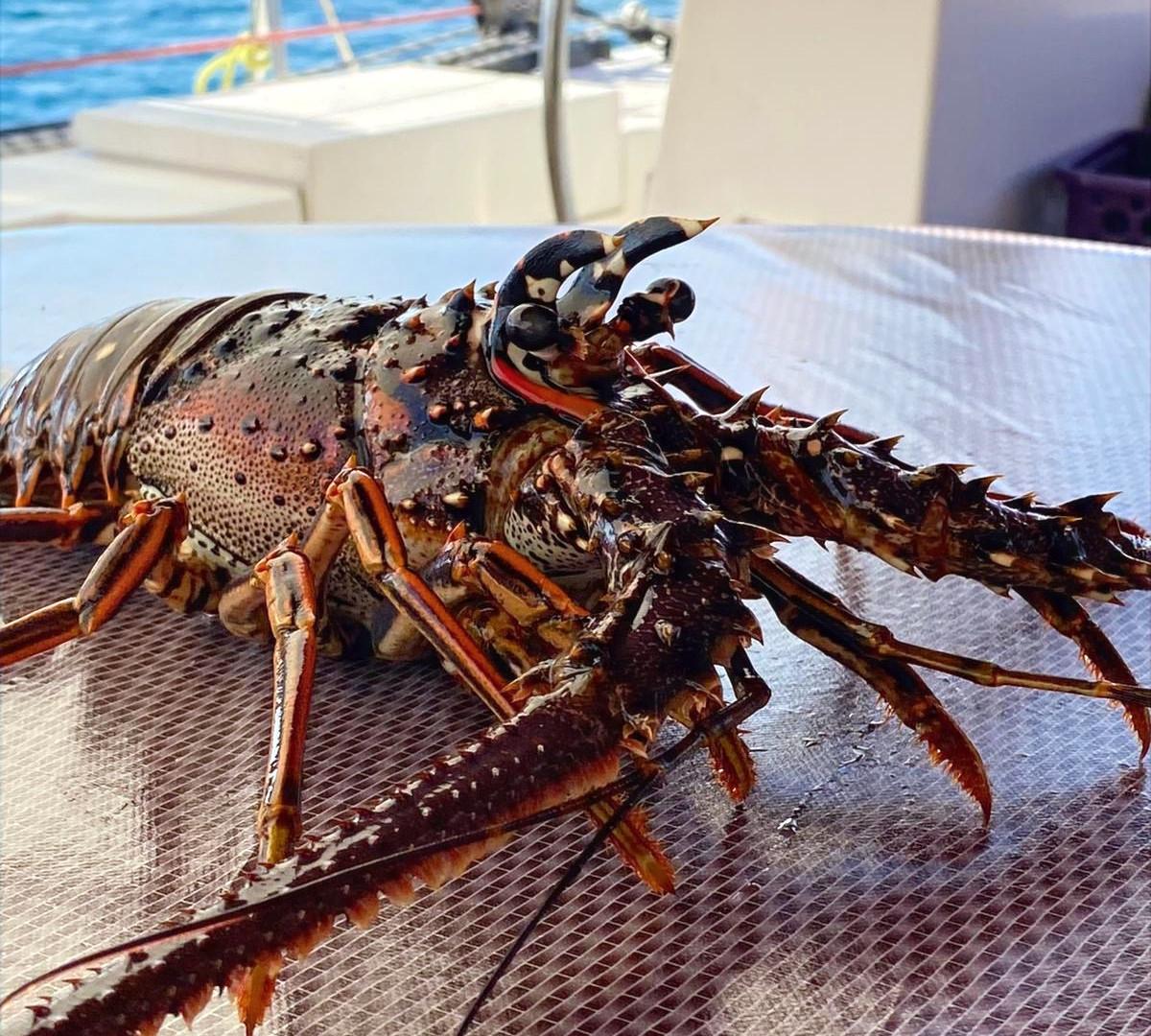 lobster for dinner.jpg