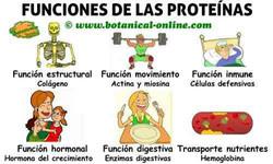 proteinas-funciones.jpg