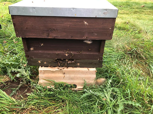 Basic Hive - £100 DEPOSIT
