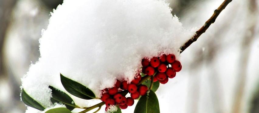 Atrakcyjny ogród zimą - jakie rośliny wybrać?