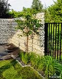 Zieleń - zakładanie i pielęgnacja ogrodów - Tru Garden Wiązowna