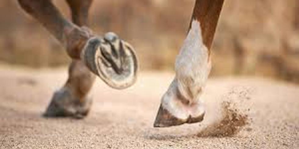 Equine Sports Medicine Symposium