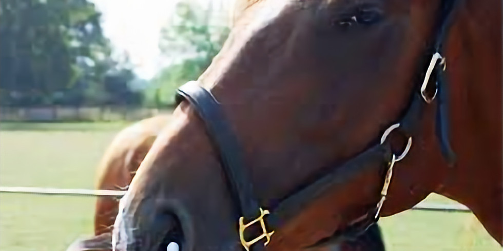 Emerging Equine Influenza Strains & Cross Protection Against Them