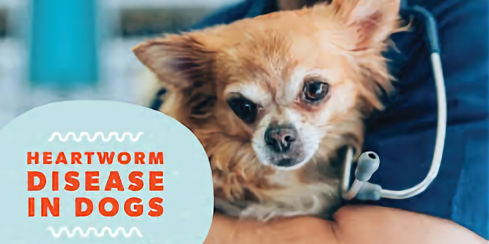 Heartworms EXPOSED:  Revealing the Reality & Risks of Heartworm Disease