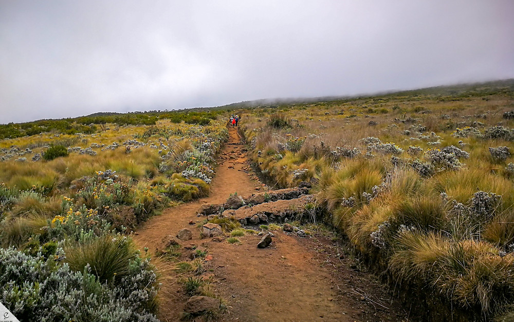 The moorland climate zone on Kilimanjaro in Tanzania.