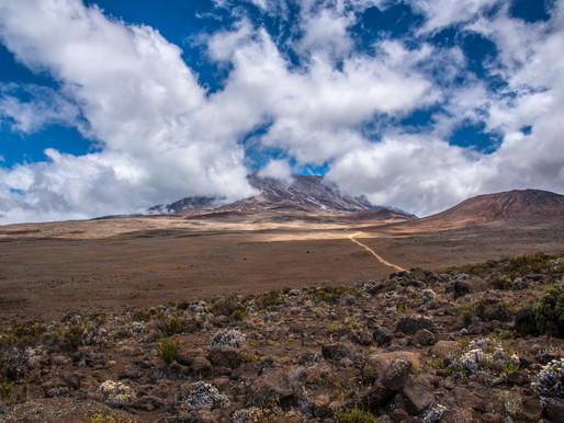 Left it All on Kilimanjaro