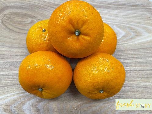 China Wow Murcott Mandarin  XL size