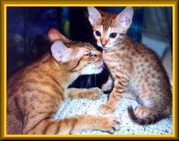 Koy Karamel, Kiss