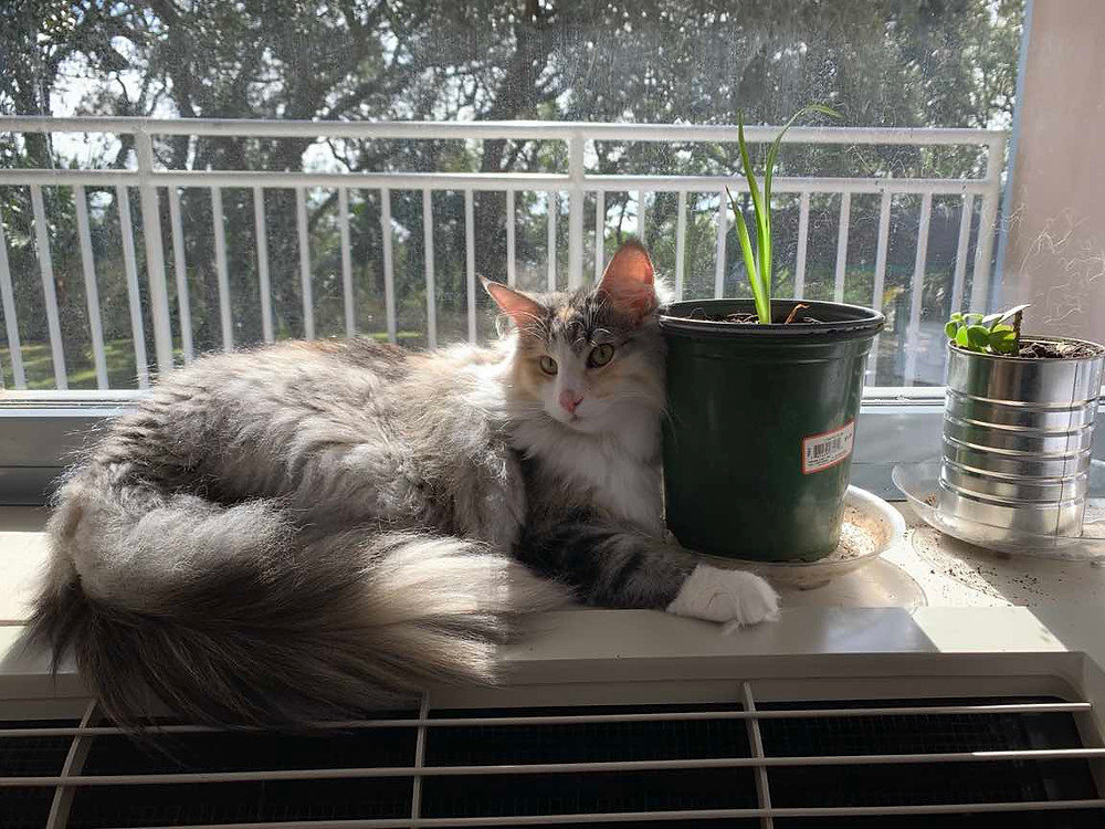 A cat lounging in a window with houseplants.