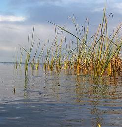 Point Sturt - Lake Alexandrina