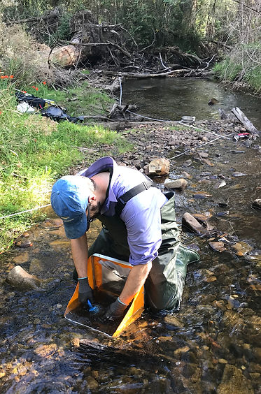 Surber sampling - Steavenson River