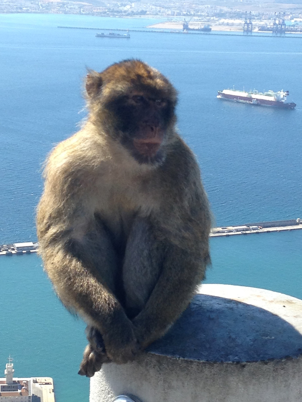 Macaque Soaking in the Sunshine in Gibraltar