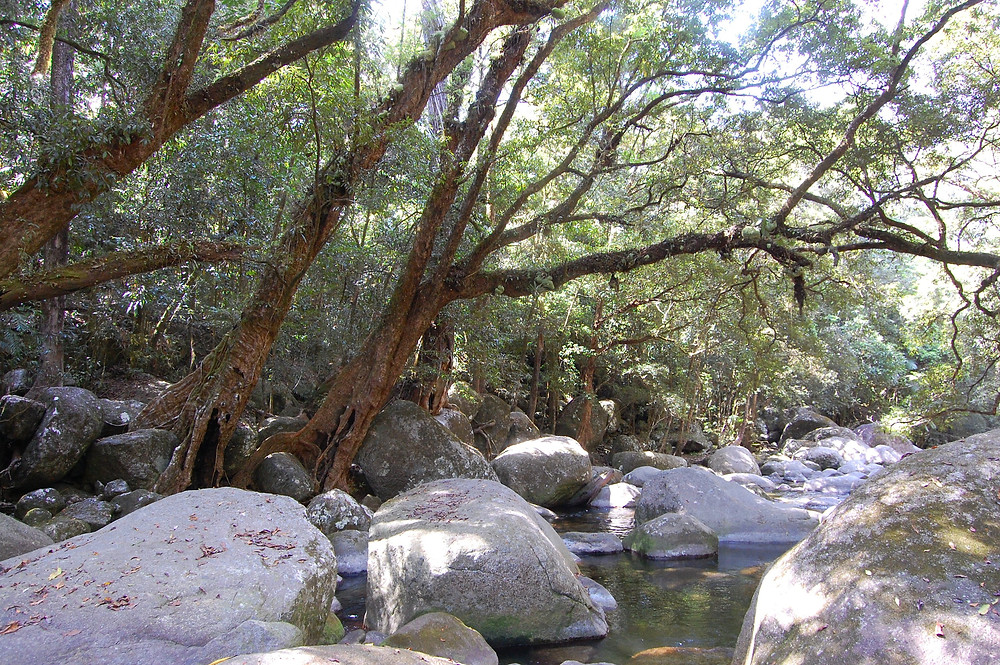 Mossman Gorge swimming pool