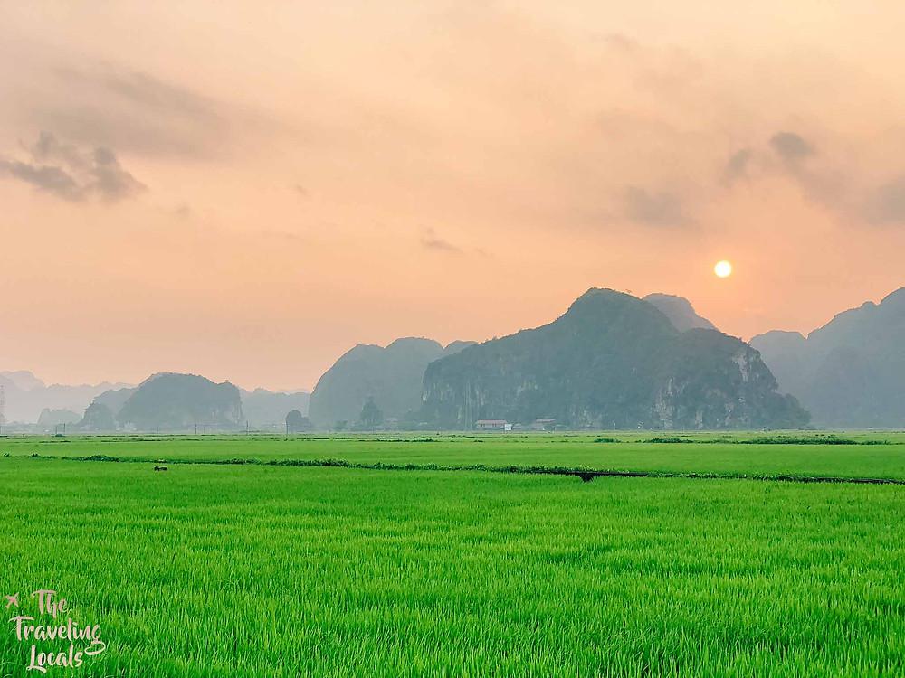 Ninh Binh Rice Paddy Vietnam