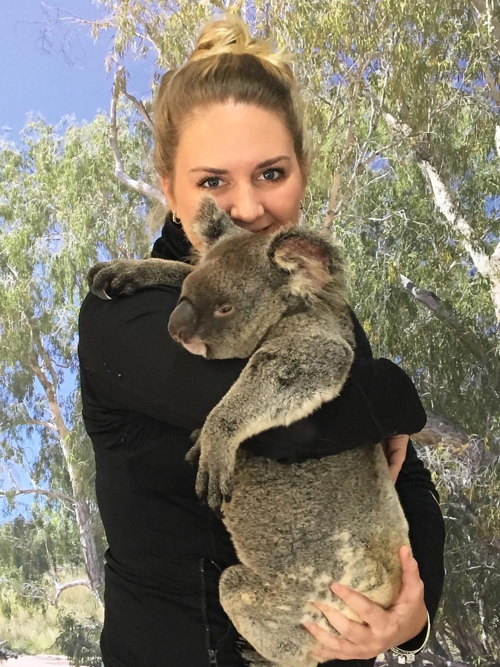 Koala bear holding at Kurunda Gardens