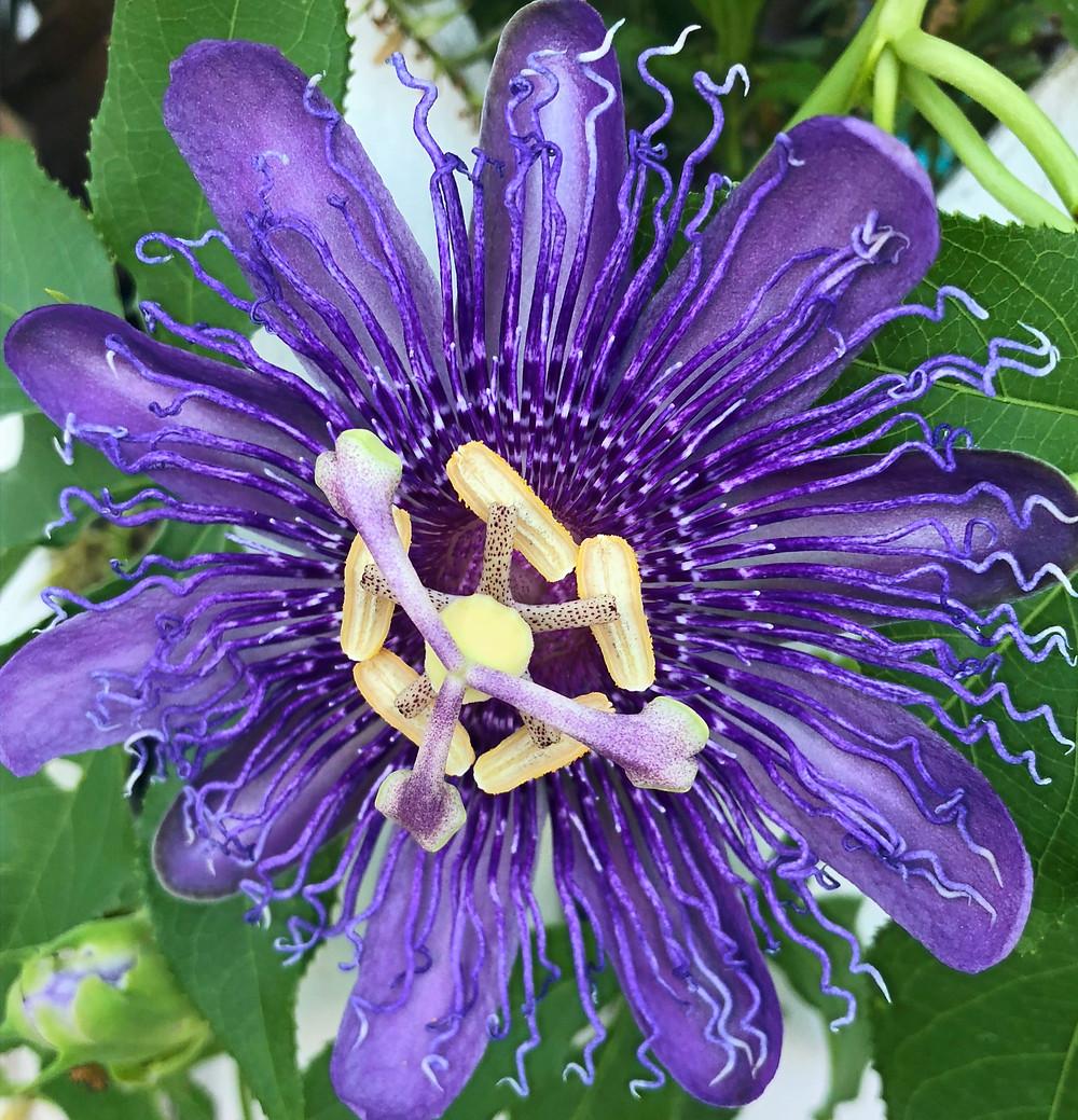 Flower Key West Garden Club
