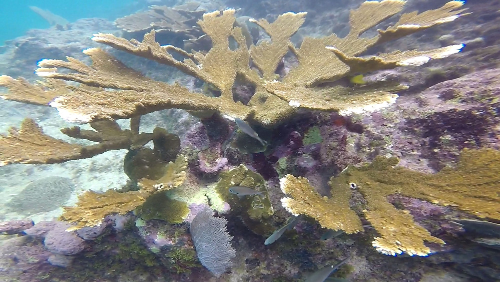 Coral Reef in Curacao