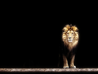 Find The Key To Solving Your Problem In The Lion's Gaze