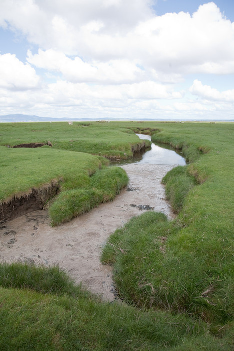 Solway Wetlands