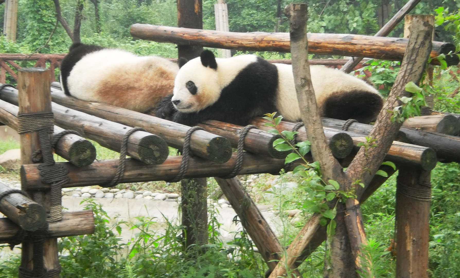 Where there are pandas...there is hope.