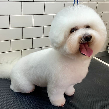 Mobile Dog Grooming | The Fairy Dog Mother | United States