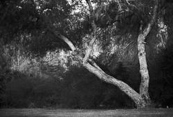 tree in Balboa Park