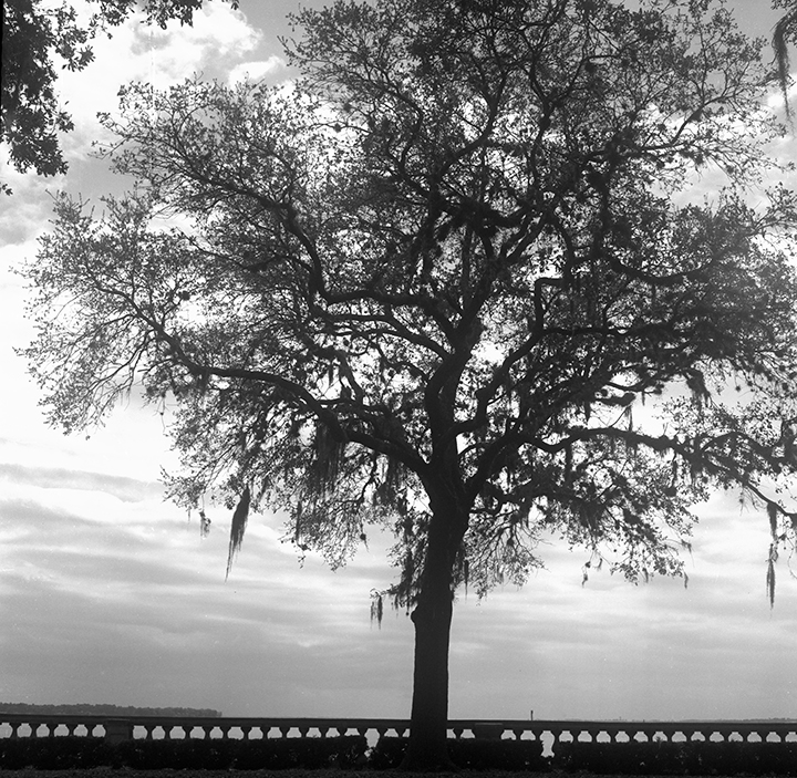 tree on boardwalk