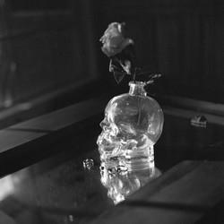 vodka skull