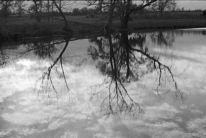 winter tree reflections