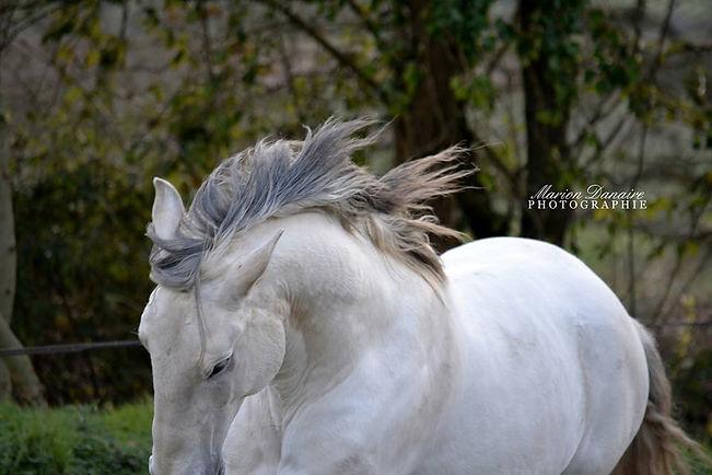 ecurie loire atlantique, pension de chevaux Loire atlantique,debourrage 44, attelage 44, jeune chevaux 44, gite loire atlantique, gite equestre , dressage de chevaux