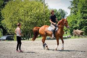 ecurie alegria, stage, dressage, bien etre du cheval et du cavalier