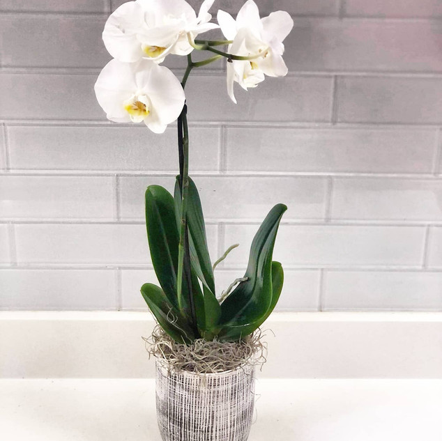 Single Orchid Sympathy planter
